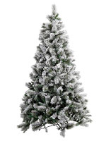 , Tree Selection, Christmas Tree Hire