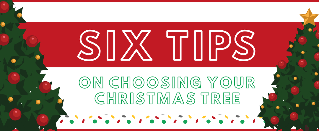 6 Top Tips To Consider When Deciding On Your Christmas Tree